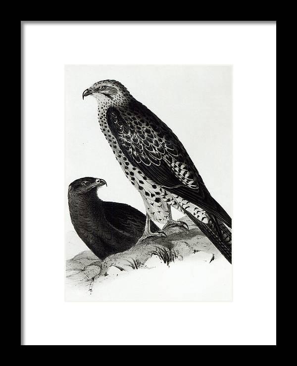 Birds Of Prey Framed Print by Charles Darwin