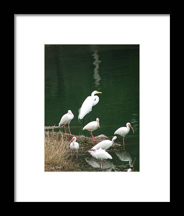 Birds Framed Print featuring the photograph Birds On 17th Street Pond by Judy Waller