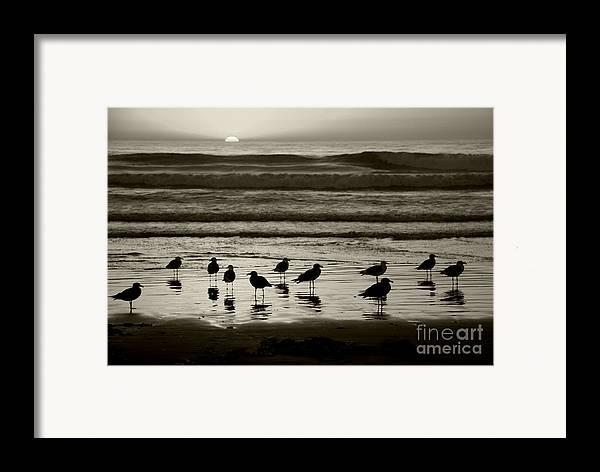 Beach Framed Print featuring the photograph Birds On A Beach by Timothy Johnson