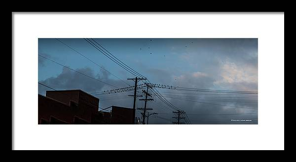 Iphone Cover Framed Print featuring the photograph Los Angeles Birds On A Wire by Ralph King