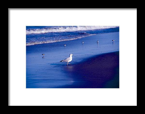 Ocean Framed Print featuring the photograph Birds On Beach by George Ferrell