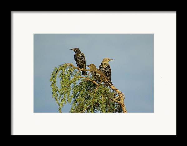 Three Framed Print featuring the photograph Birds-on-watch by Gordon Auld