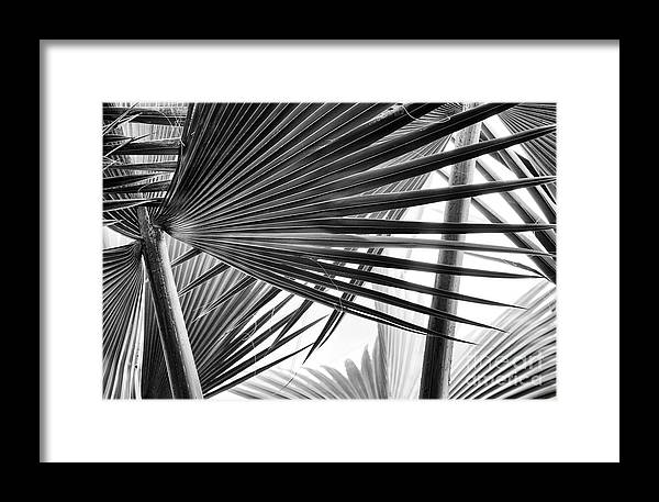 Bismarck Palm Fronds by Tim Gainey