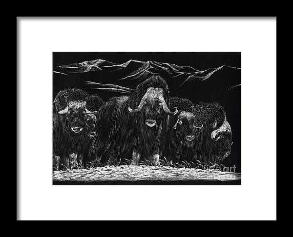 A Herd Of Bisons Gather On A Snowy Plane- Scratch Board Framed Print featuring the painting Bisons by Mui-Joo Wee