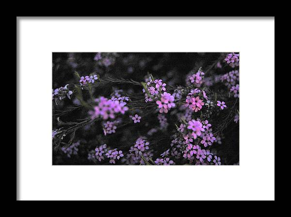 Pink Framed Print featuring the photograph Bits Of Pink by Jean Booth