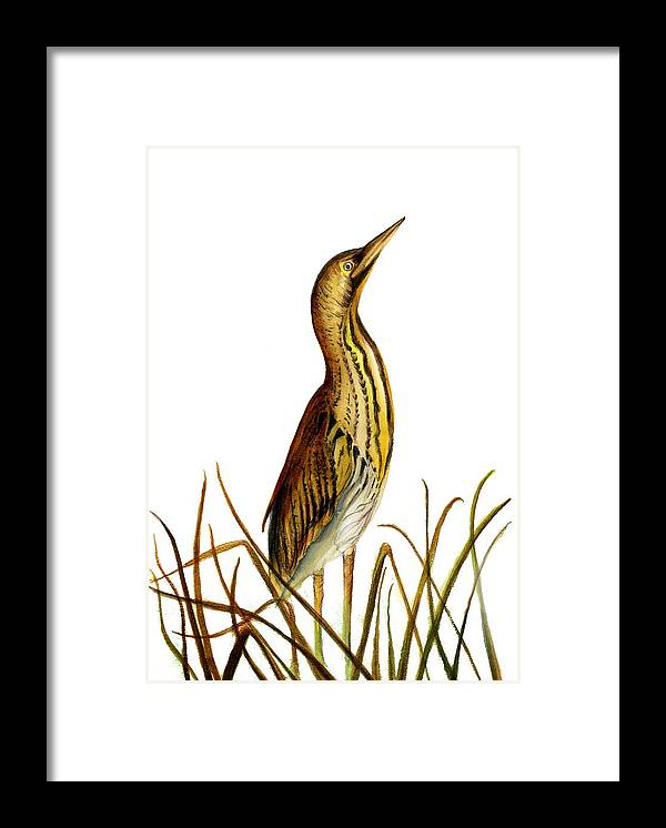 Framed Print featuring the painting Bittern Bird by Alison Langridge