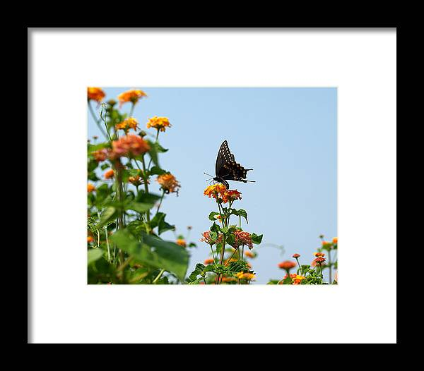 Ann Keisling Framed Print featuring the photograph Black And Blue by Ann Keisling