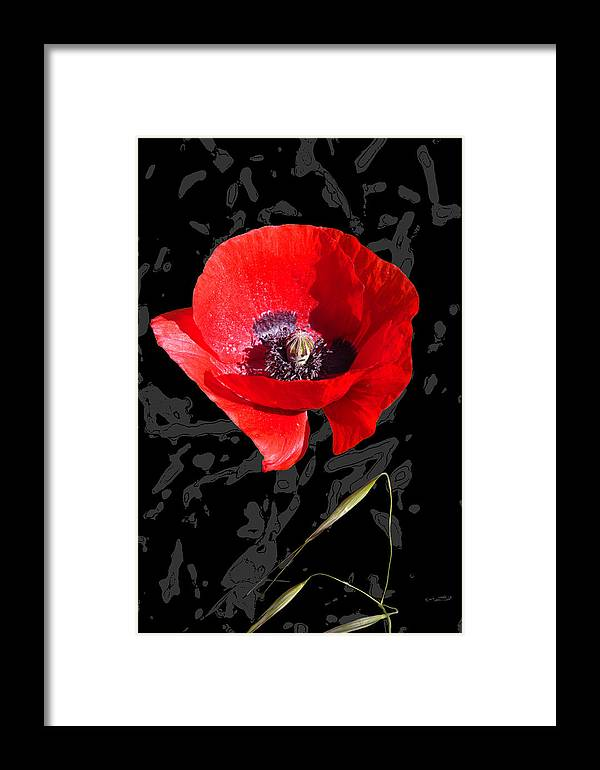 Poppy Framed Print featuring the mixed media Black And Red Poppy by Martine Affre Eisenlohr