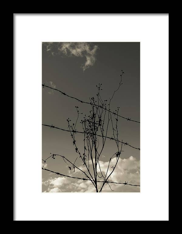 Barb Wire Framed Print featuring the photograph Black And White Barbwire And Branch by Totto Ponce