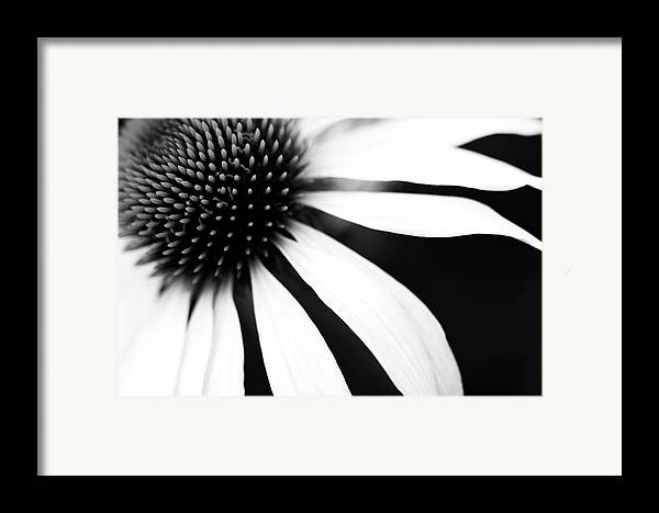 Horizontal Framed Print featuring the photograph Black And White Flower Maco by Copyright Johan Klovsjö
