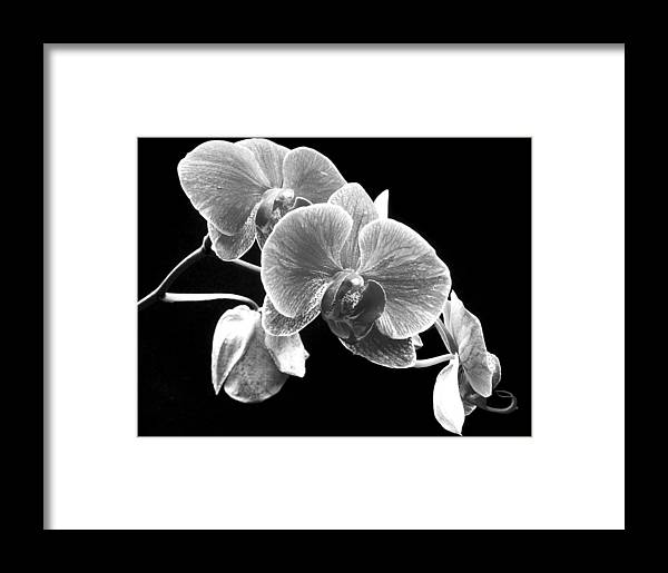 Flowers Framed Print featuring the photograph Black And White Orchid by Larry Federman