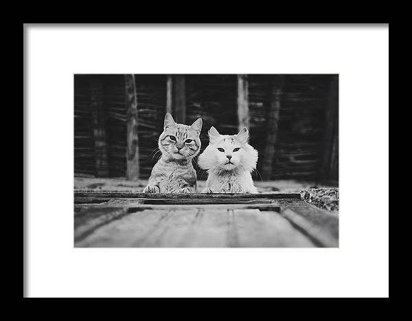 2 Framed Print featuring the photograph Black And White Portrait Of Two Aadorable And Curious Cats Looking Down Through The Window by Srdjan Kirtic