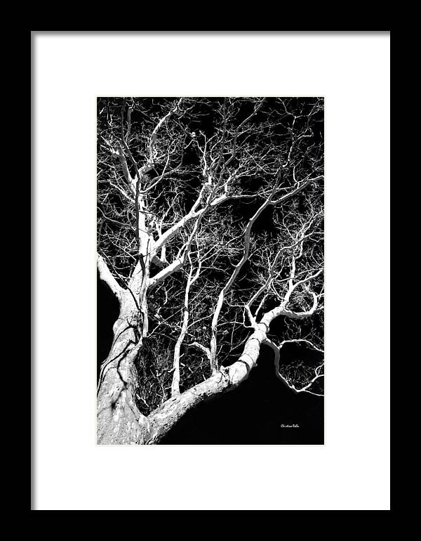 Black And White Tree Art Iii Framed Print By Christina Rollo
