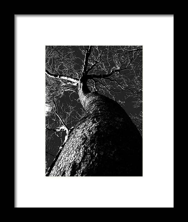 Black Beauty Framed Print featuring the photograph Black Beauty by Ed Smith