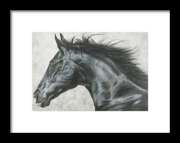 Horse Framed Print featuring the drawing Black Beauty by Paul Archer