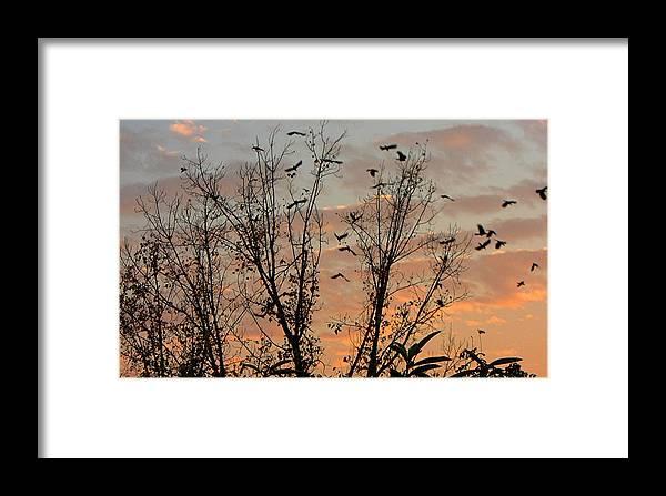 Birds Framed Print featuring the photograph Black Birds At Sundown by Caroline Urbania Naeem