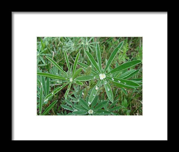 Green Framed Print featuring the photograph Black Canyon Plant by Tong Steinle