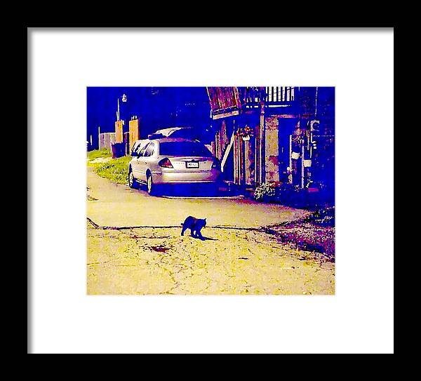 Black Cat Framed Print featuring the photograph Black Cat Crosses Path by John Toxey