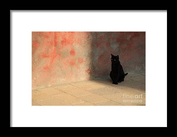 Cats Framed Print featuring the photograph Black Cat On Burano by Michael Henderson