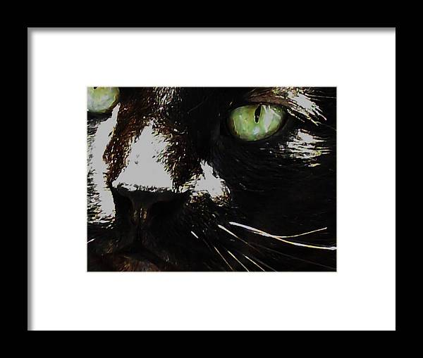 Super Macro Photography Framed Print featuring the photograph 'black Cat' by Paula Heffel