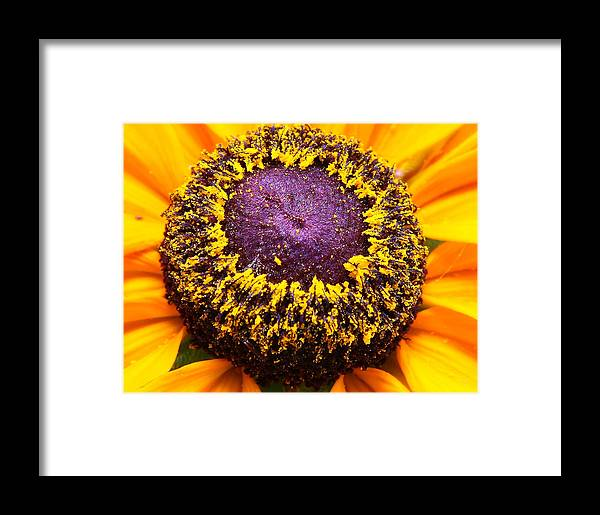 Nature Framed Print featuring the photograph Black-eyed Center by Larry Federman