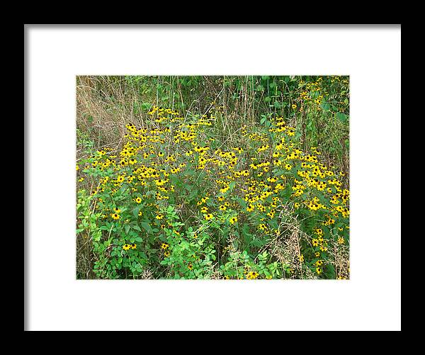 Flower Framed Print featuring the photograph Black Eyed Susans by George Jones