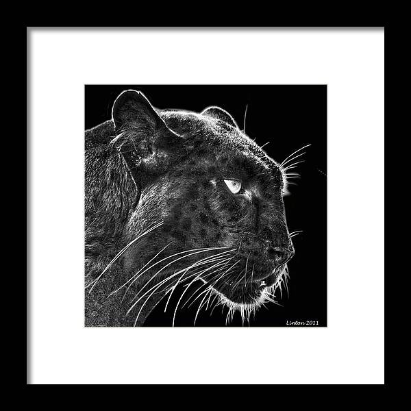 Leopard Framed Print featuring the digital art Black Leopard 2 by Larry Linton