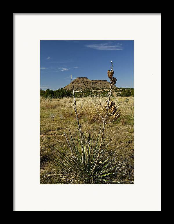 Black Mesa Framed Print featuring the pyrography Black Mesa Cacti by Charles Warren