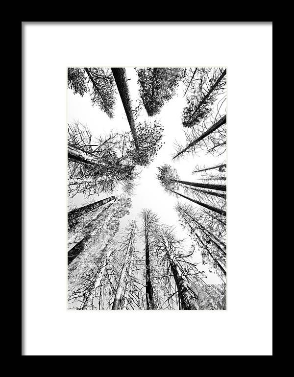 Sequoia National Park Framed Print featuring the photograph Black N White Sky-trees by Rick Pham
