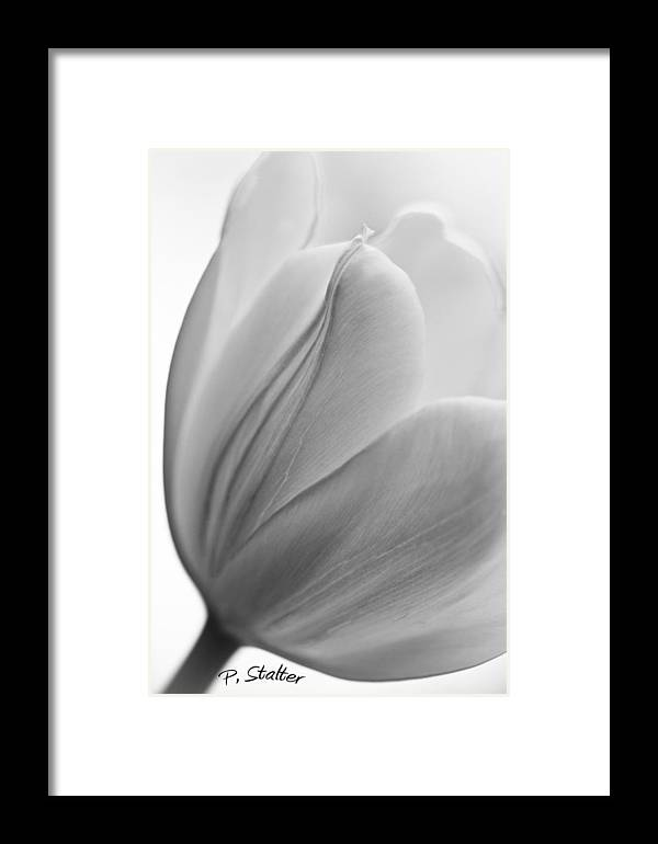 Black Framed Print featuring the photograph Black N White Tulip by Patricia Stalter