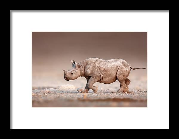Rhinoceros Framed Print featuring the photograph Black Rhinoceros Baby Running by Johan Swanepoel