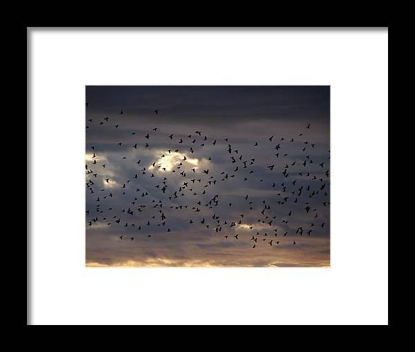 Birds Framed Print featuring the photograph Blackbird Sunset by Gene Ritchhart
