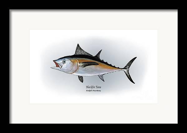 Blackfin Tuna Framed Print featuring the painting Blackfin Tuna by Ralph Martens
