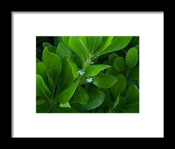 Wild Flowers Framed Print featuring the photograph Blackwater Green by Charles Peck