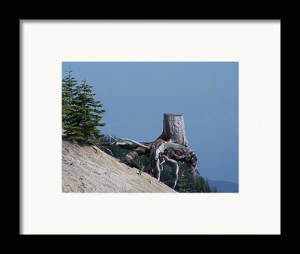 Landscape Framed Print featuring the photograph Blasted Stump by Gene Ritchhart