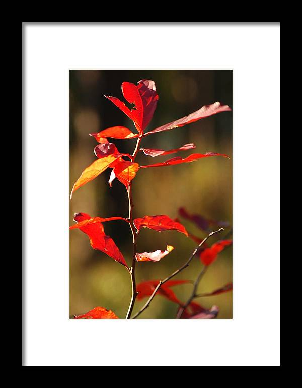 Foliage Framed Print featuring the photograph Blazing Fire by Lori Mellen-Pagliaro