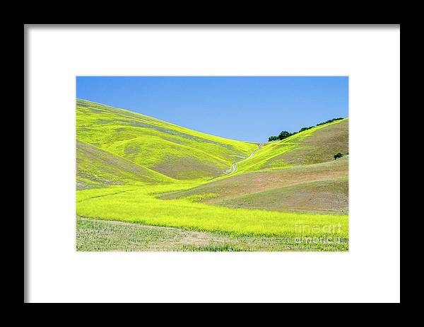 Wildflowers Framed Print featuring the photograph Blazing Hills by Jerry Sellers