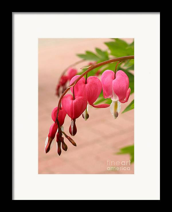 Flower Framed Print featuring the photograph Bleeding Hearts In The Park by Steve Augustin