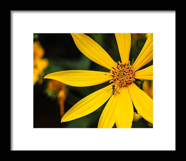 Yellow Framed Print featuring the photograph Blending In by Jessica Fronabarger