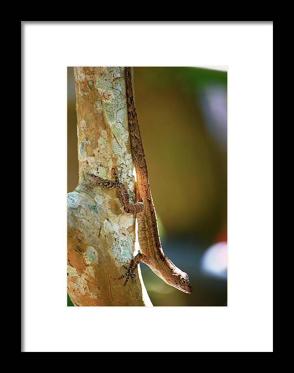 Nature Framed Print featuring the photograph Blending In by Peter McIntosh