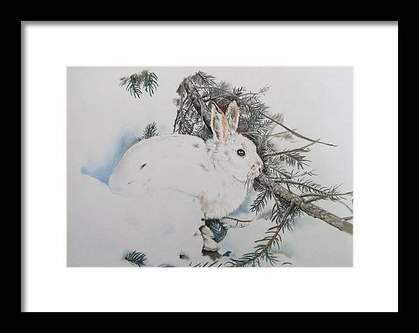 Winter Time Snowshoe Rabbit (bunny Framed Print featuring the pastel Blending In by Turea Grice