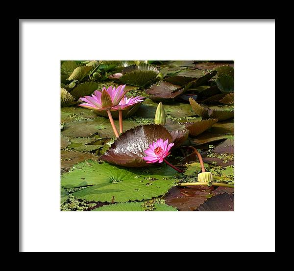 Flowers Framed Print featuring the photograph Blind River by Gerda Reed