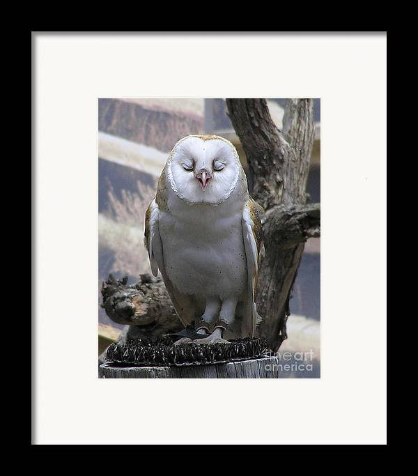Barn Framed Print featuring the photograph Blinking Owl by Louise Magno