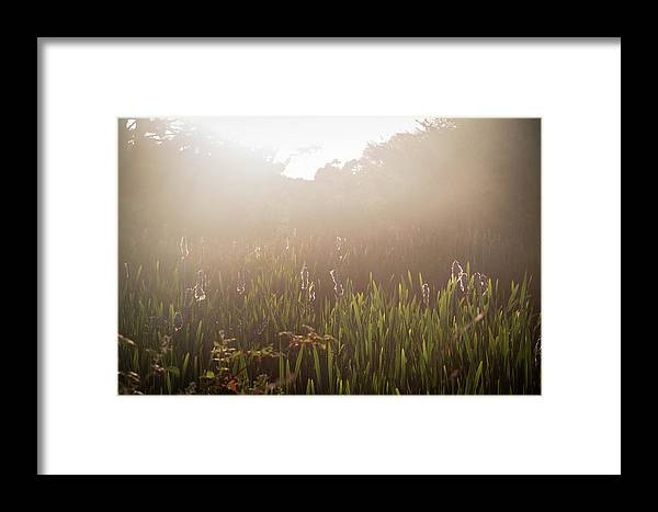 Humboldt Framed Print featuring the photograph Bliss by Jillian Butolph