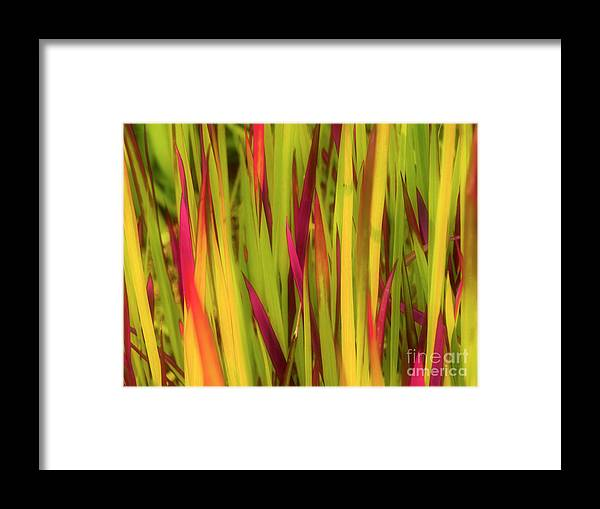 Grass Framed Print featuring the photograph Blood Grass by Tara Turner