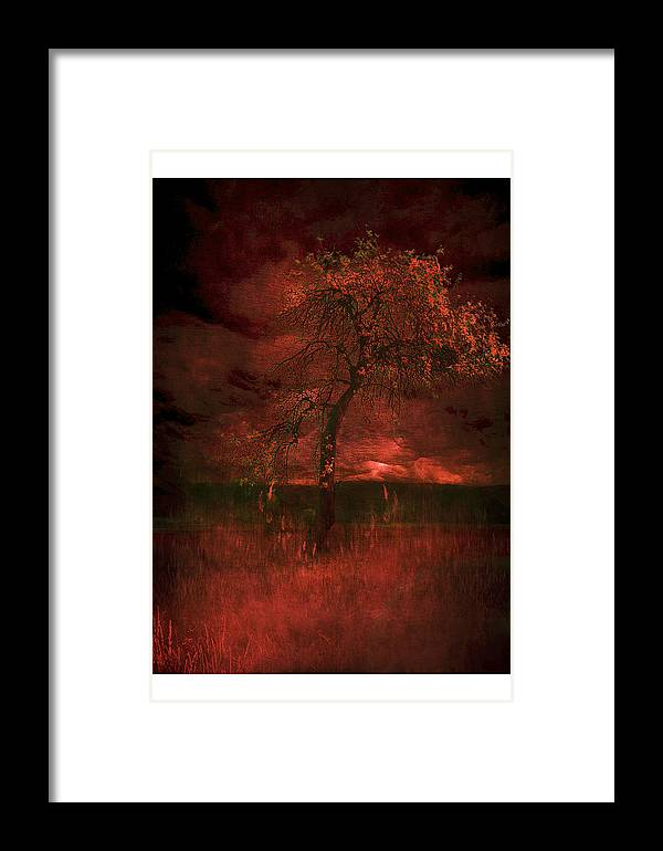 Framed Print featuring the photograph Bloody Tree by Zygmunt Kozimor