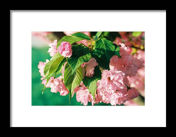 Spring Framed Print featuring the photograph Bloom by Jonathan Michael Bowman