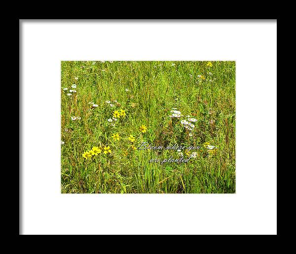 Bloom Framed Print featuring the photograph Bloom by Lou Novick