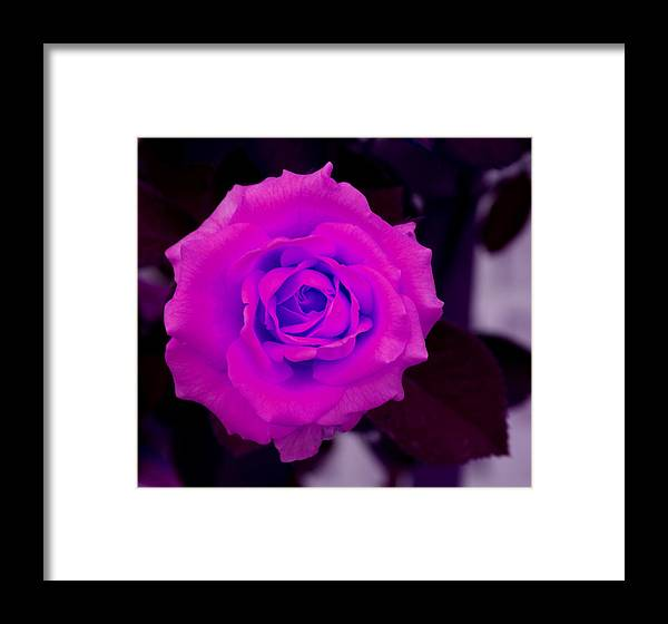 Floral Framed Print featuring the photograph Bloom N Love-abstract by Debbie May