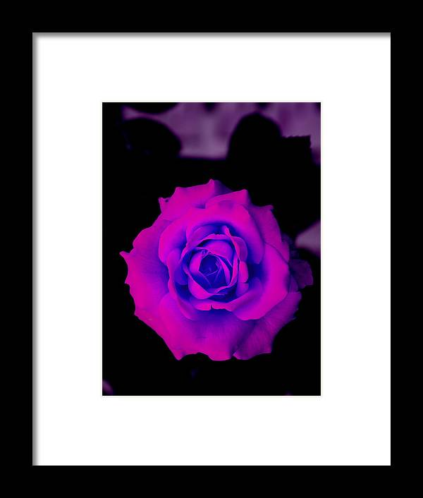 Rose Rose Bud Framed Print featuring the photograph Bloom N Love by Debbie May